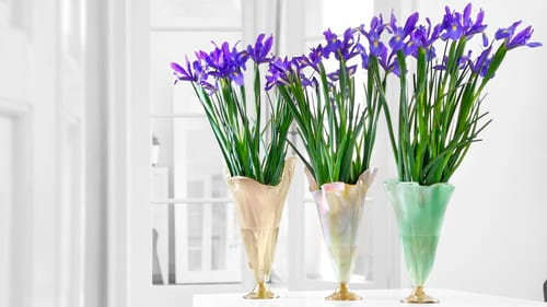 Decorative glass vases for home decor and centerpieces with the products Thais, Merry & Paris by Anna Vasily.